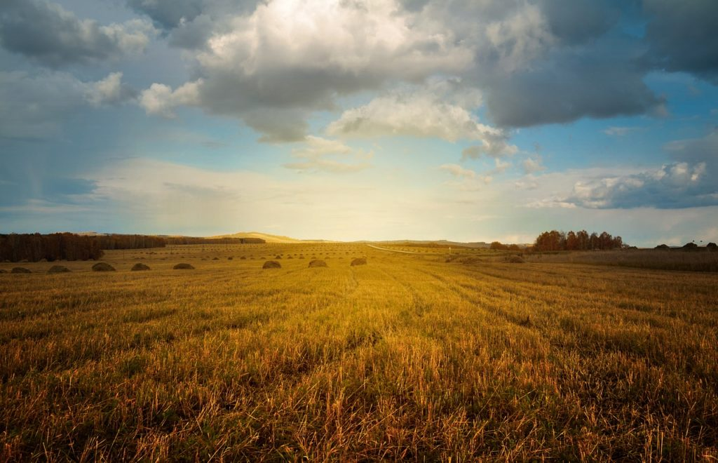 ARiMR Chroń wody przed azotanami pochodzenia rolniczego – złóż wniosek o dofinansowanie
